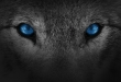 Arctic Wolf could reach $4bn valuation
